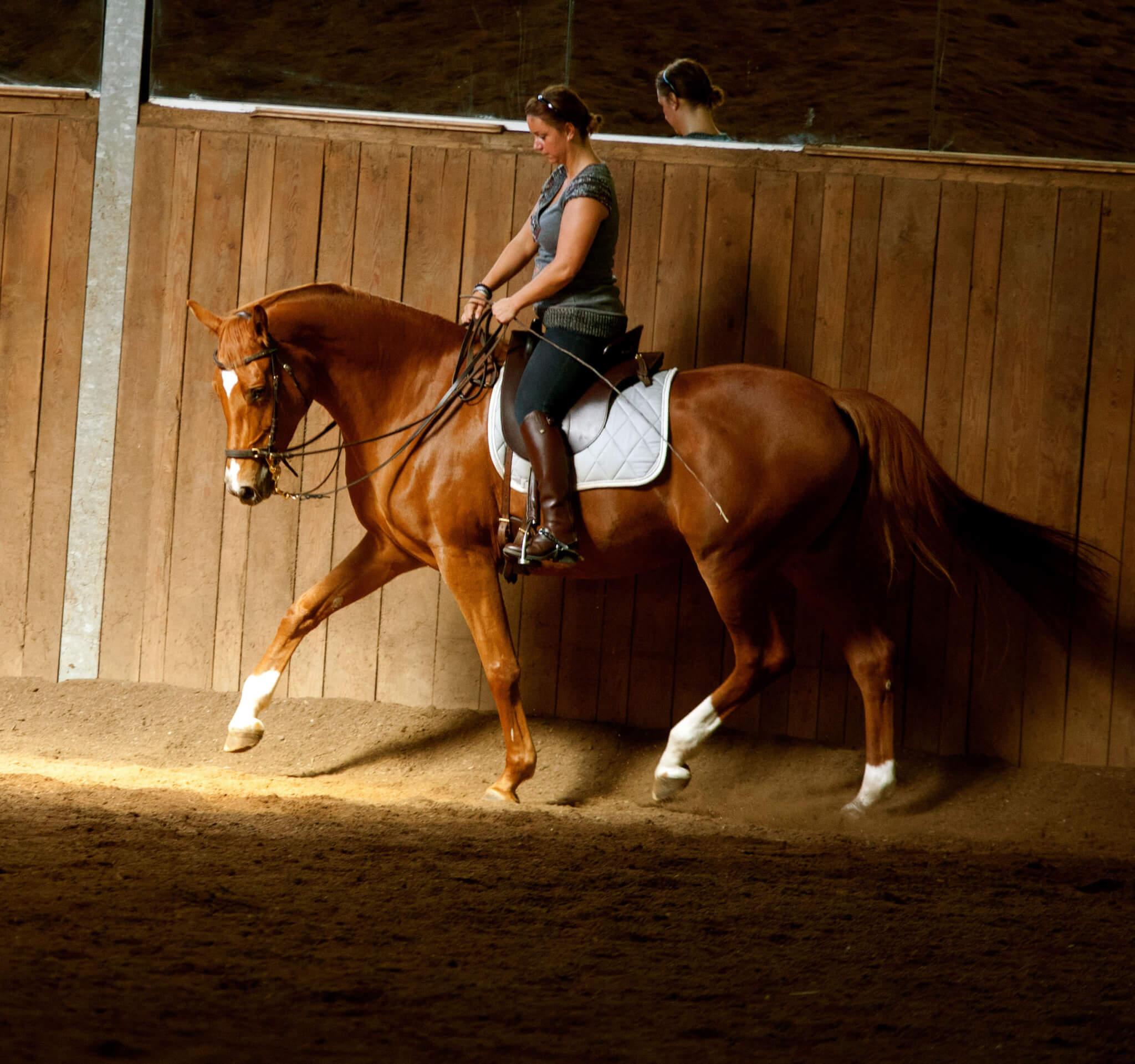 Schubkraft versus Tragkraft  – oder: Reite dein Pferd vorwärts und richte es gerade!