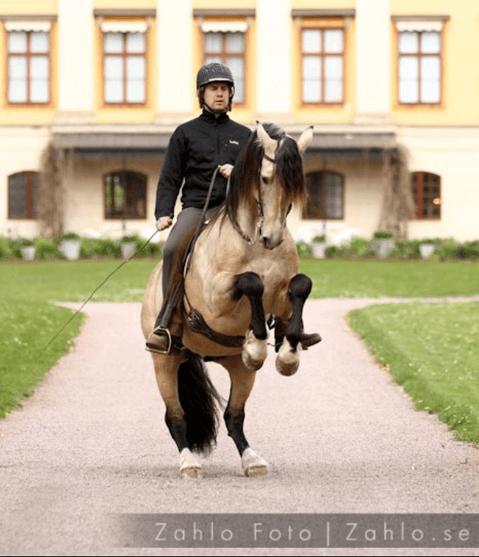 Relax – take it easy – Interview mit Christofer Dahlgren
