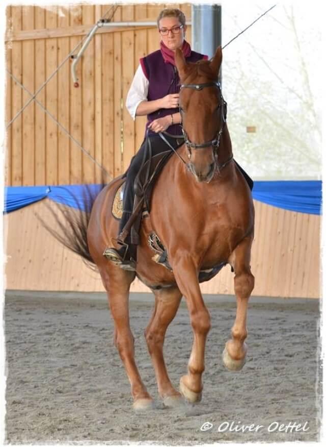 Reiterliche Analyse im Paartanz – Kursbericht Bent Branderup