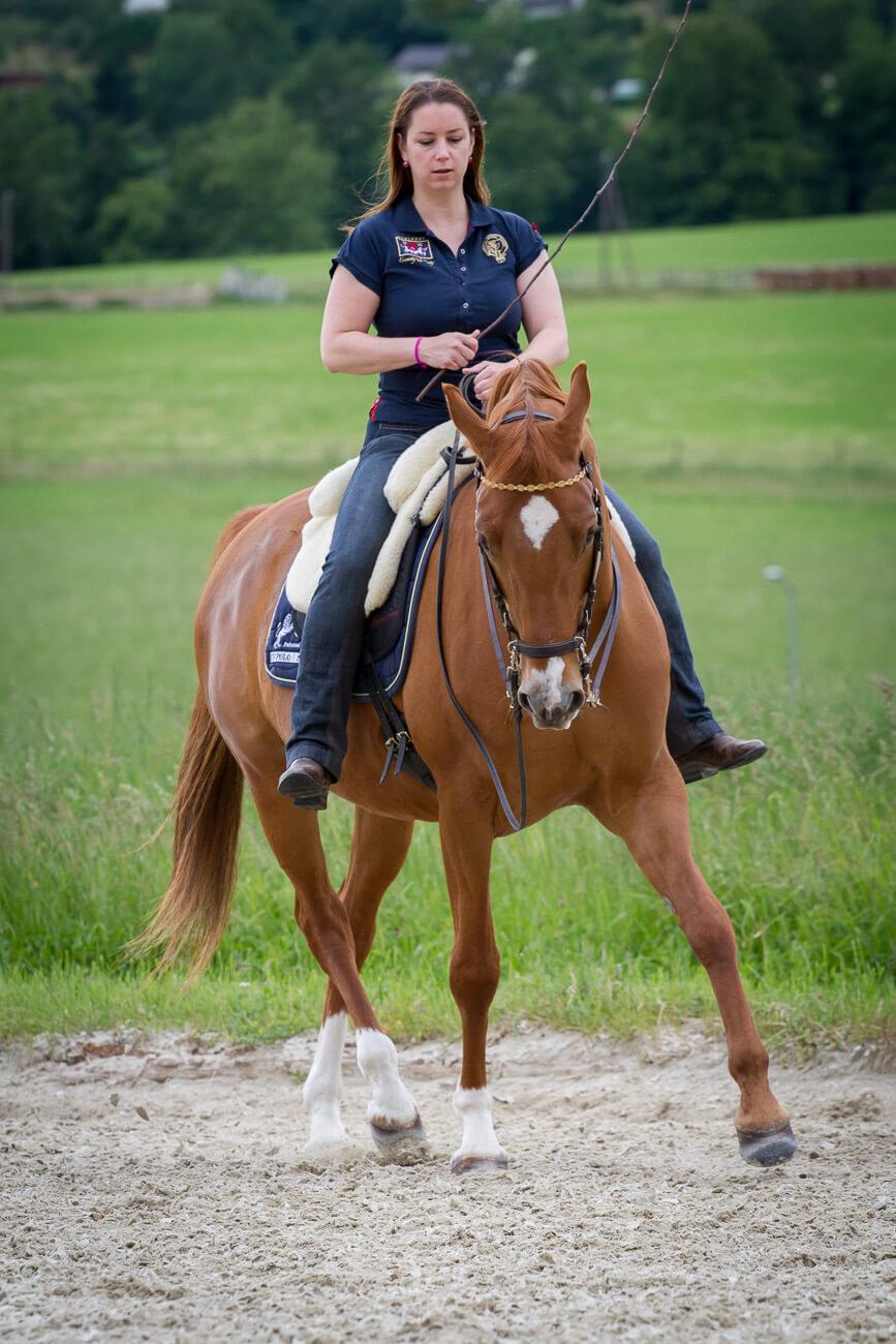 Wenn Reiter ein Aspirin für das Aspirin der Reitkunst brauchen…