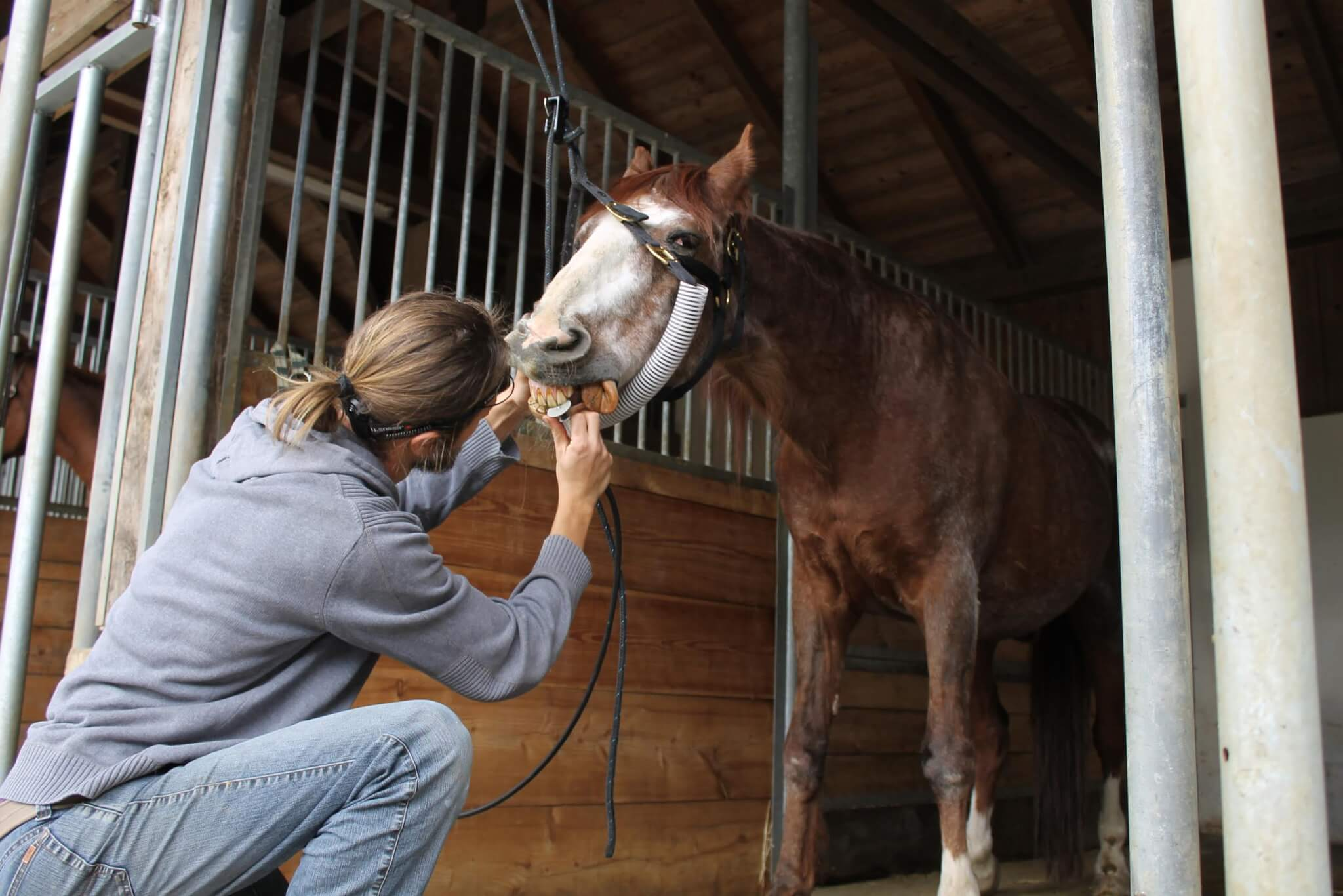 magengeschwür beim pferd zusatzfutter